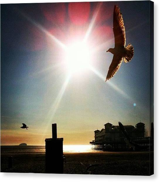 Seagulls Canvas Print - #sunset_madness #flight #seagull by Kevin Zoller