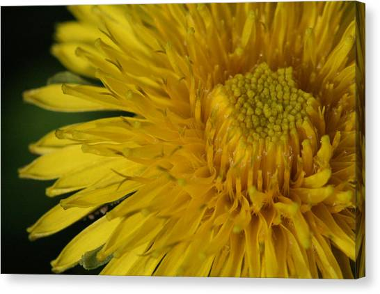 Sunshine Weed Canvas Print