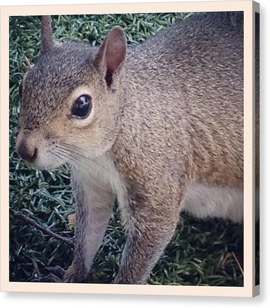 Squirrels Canvas Print - Super Close by Beach Bum Chix