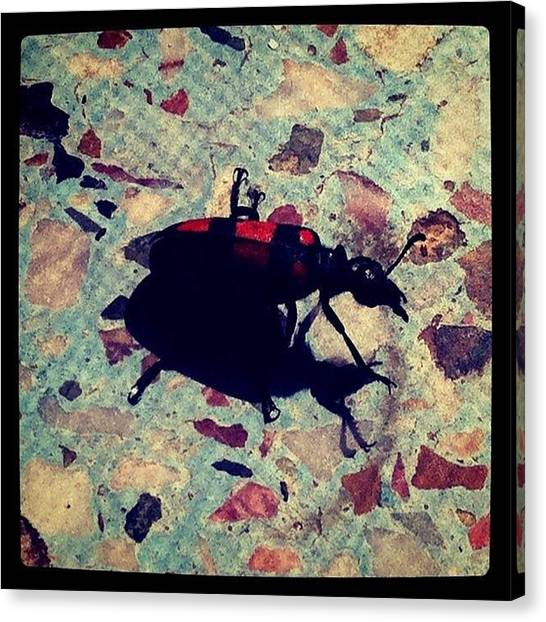 Ladybugs Canvas Print - Superbug! by Moon Man
