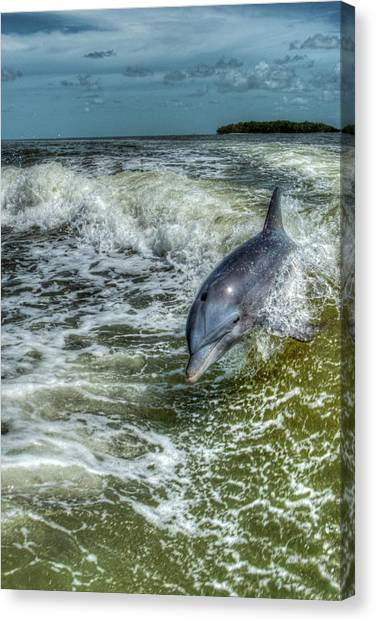 Surfing Dolphin Canvas Print