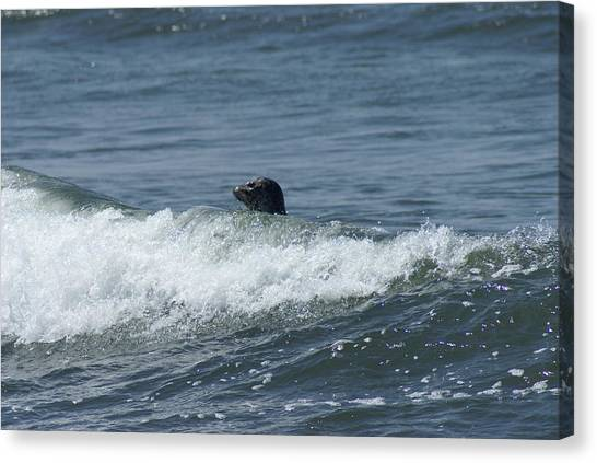 Surfing Seal Canvas Print