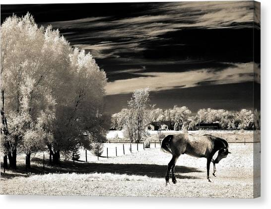 Dreamy Horse Canvas Print - Surreal Fantasy Horse Landscape by Kathy Fornal