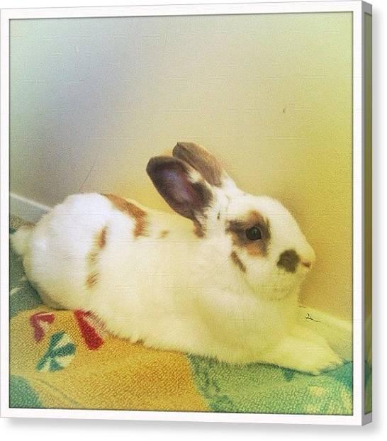 Rabbits Canvas Print - 🐇susana Oria #floofy #rabbit by Ange Exile DuParadis