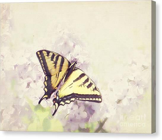Swallowtail On Lilac Canvas Print