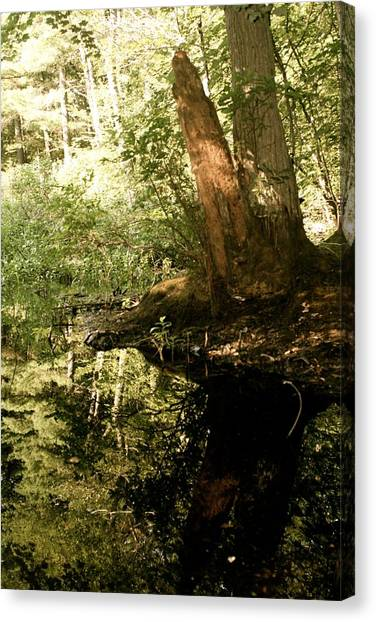 swamp hyde park MA Canvas Print by Kelsey Reeann Rocco