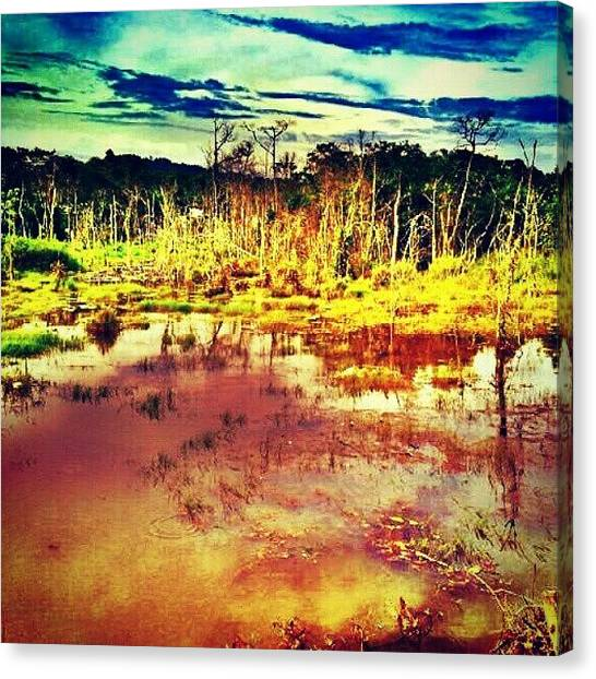 Swamps Canvas Print - #swamp #landscape #skyline #statigram by Iskandar Bukan Alexander