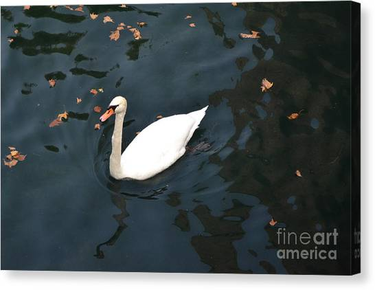 Swan In Autumn Canvas Print