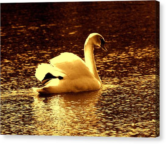 Swan Song 3 Canvas Print
