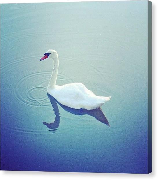 Swans Canvas Print - Swan #summer #water #creek #bird #swan by Jonny Luter
