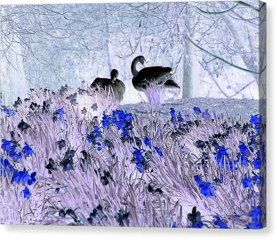 Swans In The Blue Canvas Print by Fred Whalley