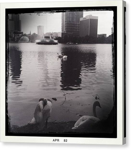 Water Birds Canvas Print - Swans On Lake Eola #hipstamatic by James Roberts