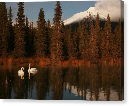 Swans Wrangell St. Elias National Park And Preserve Canvas Print