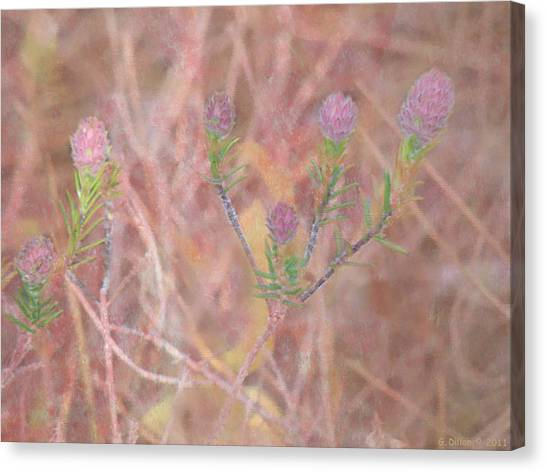 Sweet Clover Canvas Print