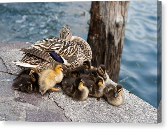 Sweet Family Canvas Print by Andrea Barbieri
