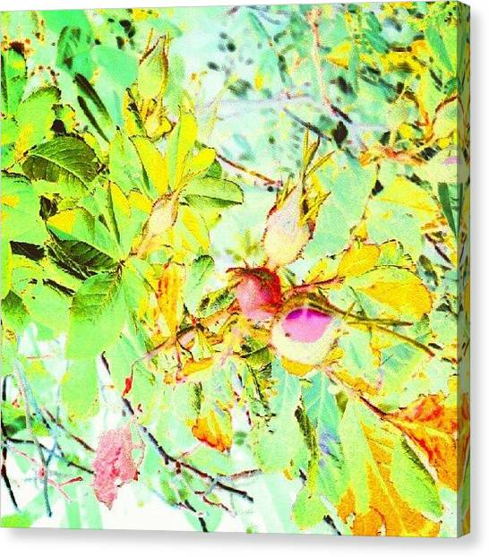 Impressionism Canvas Print - Sweet Rose Buds #android #andrography by Marianne Dow
