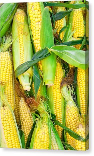 Corn Maze Canvas Print - Sweetcorn by Tom Gowanlock