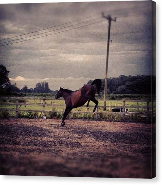 Thoroughbreds Canvas Print - Swift Having Some Fun ;) #horse #ponies by Caitlin Hay