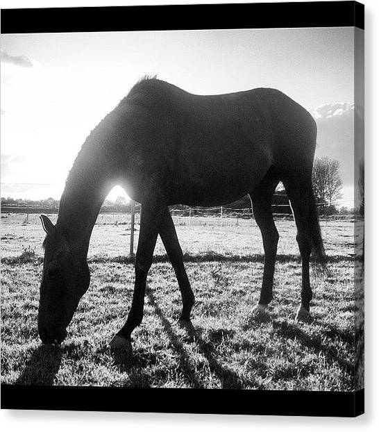 Thoroughbreds Canvas Print - #swift #trees #green #grass by Caitlin Hay