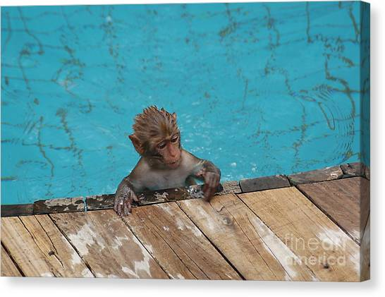 Swim Boy Canvas Print