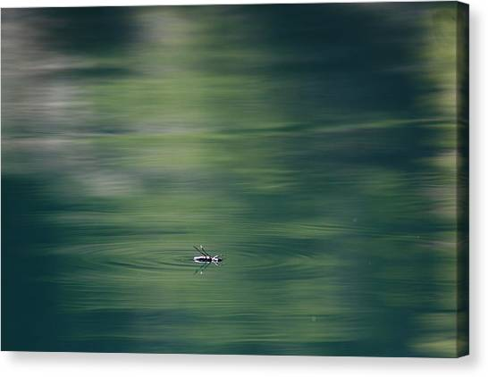 Swimming Beetle Canvas Print