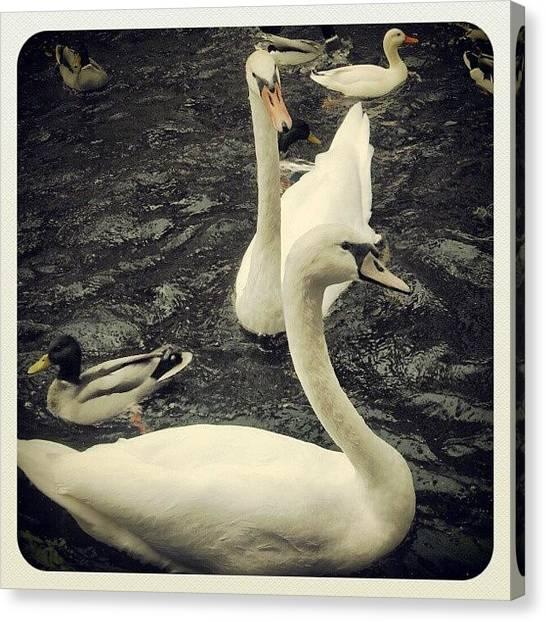 Geese Canvas Print - Swimming Geese by Sigit Pamungkas