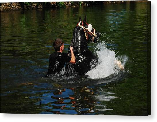 Canvas Print - Swimming The Horses 3 by Peter Jenkins