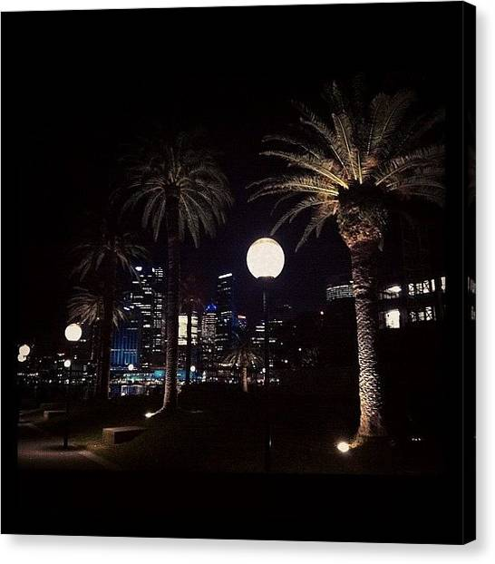 Palm Trees Canvas Print - #sydney #australia #lights #park by Glen Offereins