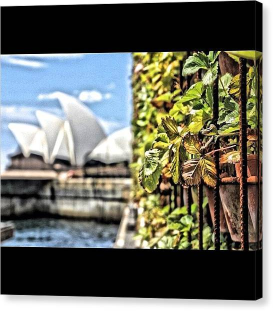 Strawberries Canvas Print - #sydney #australia #picoftheday by Sydney Australia