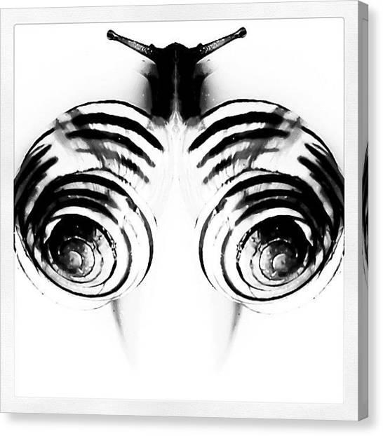 Symmetrical Canvas Print - #symmetrical #symmetry #snail by James Peto