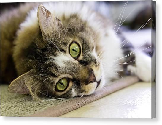 Tabby Cat Looking At Camera Canvas Print