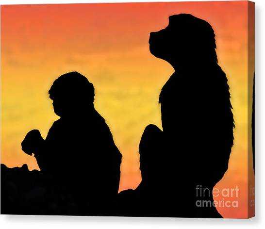 Taif Monkey Canvas Print by Graham Taylor