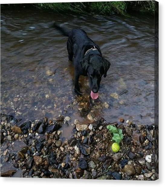 Tennis Ball Canvas Print - Tail In The Tale by Dave Harris
