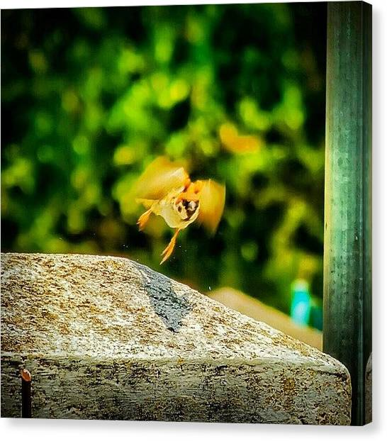 Sparrows Canvas Print - Take Off by Rahman Galela