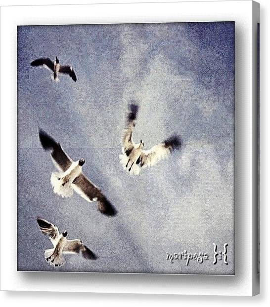 Flying Canvas Print - Taking Flight by Mari Posa