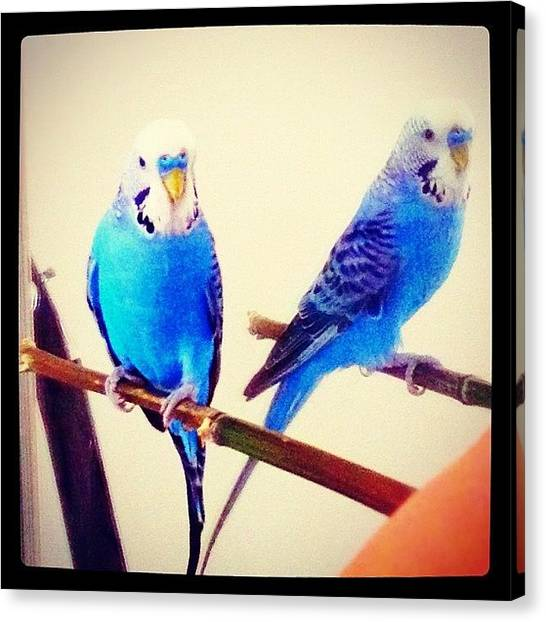 Tropical Birds Canvas Print - Tako: i'm Meeting My New Friend For by Vincy S