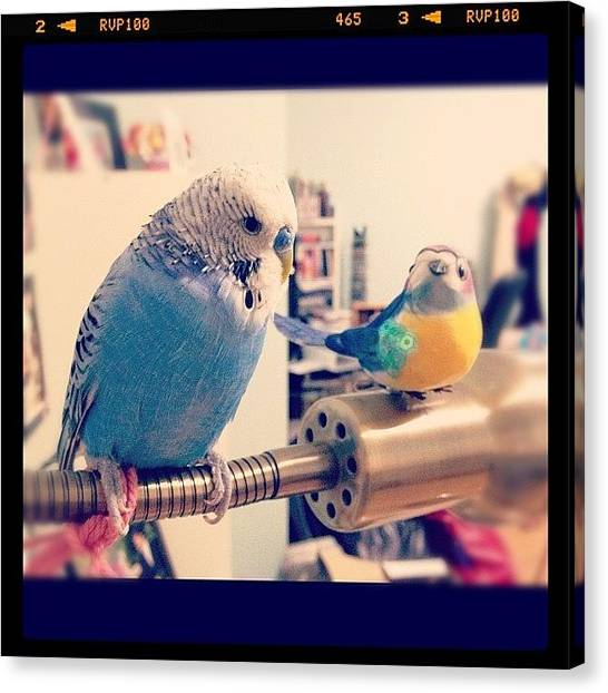 Finches Canvas Print - Tako Loves His New Friend So Much He by Vincy S