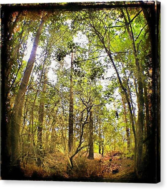 Forest Paths Canvas Print - Tall Trees by Vicki Field