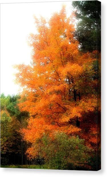 Tangerine Autumn  Canvas Print by Darlene Bell