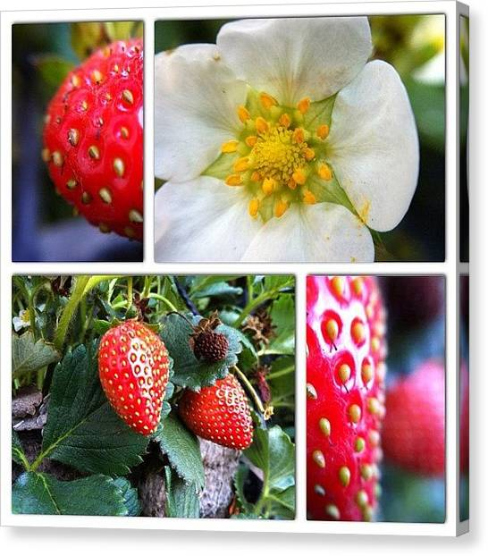Strawberries Canvas Print - Tasty & Deadly  #macro #macroporn by Uriel Gonzalez
