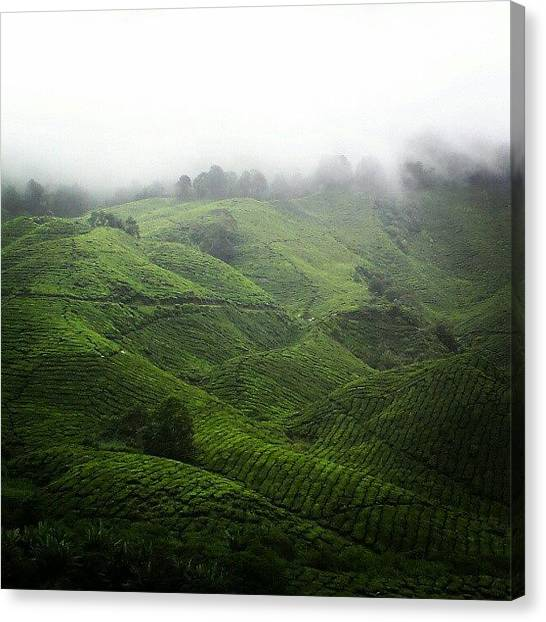 Tea Canvas Print - Tea Garden by Lily Tien