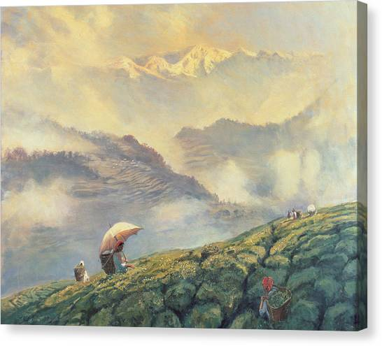 Tea Leaves Canvas Print - Tea Picking - Darjeeling - India by Tim Scott Bolton