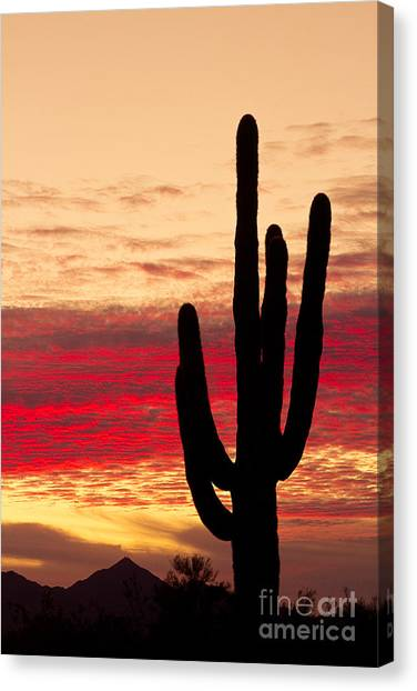 Tequila Sunrise Canvas Print - Tequila Sunrise by James BO  Insogna