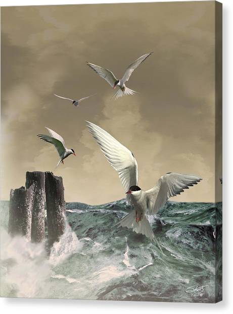 Terns In The Wind Canvas Print