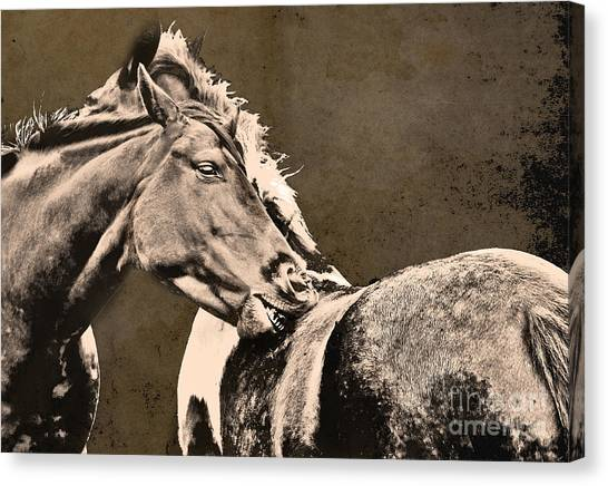 Textured Horses Canvas Print by Darren Burroughs