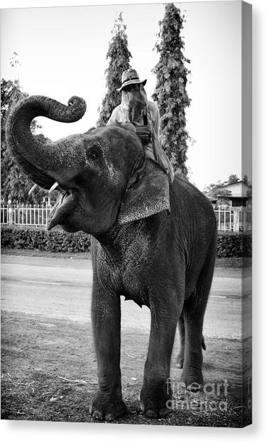 Thai Elephant Roar Canvas Print