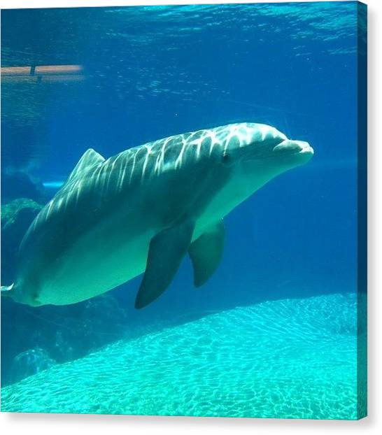 Dolphins Canvas Print - Thanks For The Fish! by S Michelle Reese