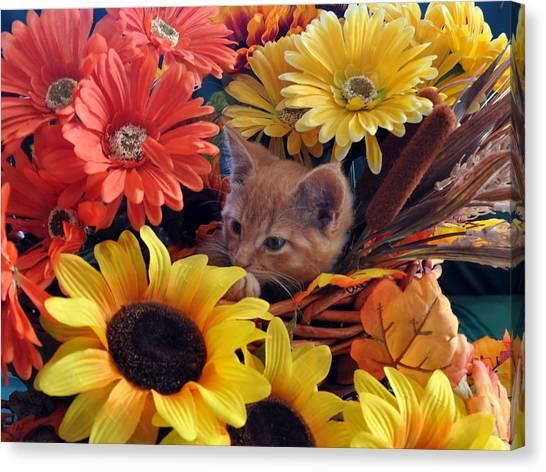 Thanksgiving Kitten Sitting In A Flower Basket Peeking Through Sunflowers - Kitty Cat In Falltime  Canvas Print by Chantal PhotoPix