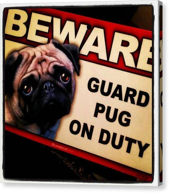 Pugs Canvas Print - Thats Right ! Beware !  #otisthepug by Oliver Parker