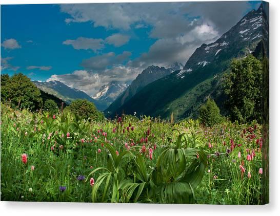 The Alpine Meadows Canvas Print by Olga Vlasenko